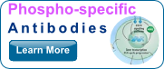 Phospho-Specific Antibodies